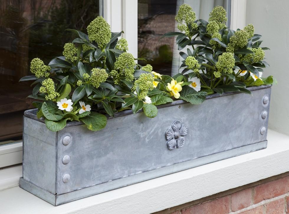 arthurjack-window-box